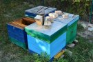 "Successful results for ""Honey Beekeeper"" apiary"